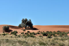 Kalahari farm scene, Namibia Royalty Free Stock Photo