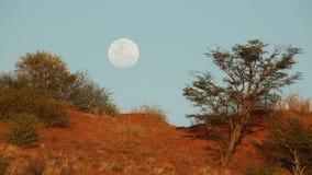 Kalahari moon landscape stock footage