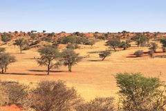 Kalahari Namibia fotografia royalty free