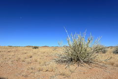 The Kalahari in Namibia Stock Images