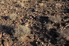 The Kalahari in Namibia Stock Photo