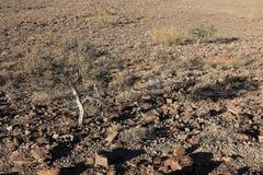 The Kalahari in Namibia Royalty Free Stock Image