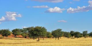 Kalahari pustynia, Namibia Obraz Royalty Free