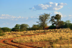 Kalahari pustynia, Namibia Zdjęcie Stock