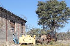 Kalahari rest II royaltyfri foto