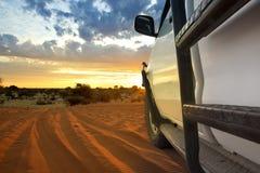 Kalahari safari Royaltyfri Foto