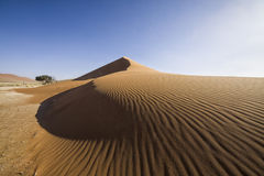 Kalahari sand dune Royalty Free Stock Photo