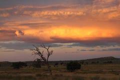 Kalahari sunset. A Kalahari sunset before a thunderstorm Stock Photo