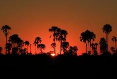 Kalahari sunset. Dusk in Botswana, Africa's, Kalahari Desert Royalty Free Stock Photo