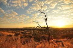 Kalahari Sunset. Golden hues as the sun sets over desert, scrubland with scatter clouds above Royalty Free Stock Photo
