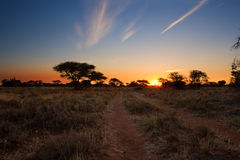 Kalahari sunset with trees grass and blue sky Royalty Free Stock Image
