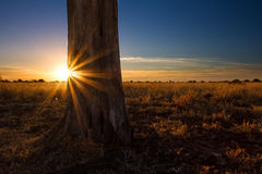 Kalahari sunset with trees grass and blue sky Stock Photo