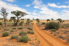 Kalahari tracks. Sandy trail with tire tracks in the red sand of the Kalahari desert, Kagalagadi Transfrontier Park, South Africa Royalty Free Stock Photo