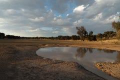 Kalahari Royalty Free Stock Photos