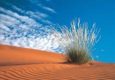Kalahari-Wüste Lizenzfreies Stockfoto