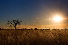 Kalahati sunset with trees grass and blue sky Stock Image