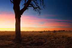 Kalahati sunset with trees grass and blue sky Stock Photography
