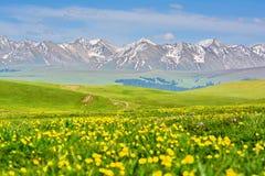 Kalajun grässlätt i Xinjiang Kina Arkivbild