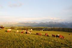 Kalajun Grassland At Sunset Stock Image