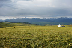 Kalajun Grassland In The Morning Royalty Free Stock Photos