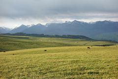 Kalajun grassland in the morning Stock Images