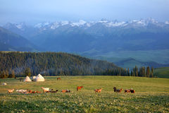 Kalajun grassland with snow mountain in summer Stock Photo