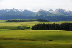Kalajun grassland with snow mountains in summer Stock Images