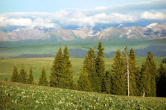 Kalajun grassland with snow mountains in summer Stock Image