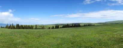 Kalajun grassland in summer Stock Photos