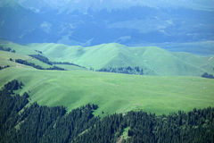 Kalajun grassland in summer Stock Photos