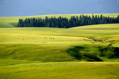 Kalajun grassland in summer Stock Images
