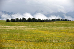 Kalajun grassland in summer Stock Photography