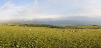 Kalajun grassland in summer Royalty Free Stock Images