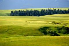 Kalajun obszar trawiasty w lecie obrazy stock
