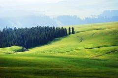 Kalajun obszar trawiasty w lecie fotografia stock