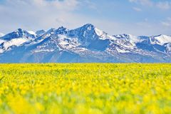 Kalajun-Wiese in Xinjiang Lizenzfreies Stockbild