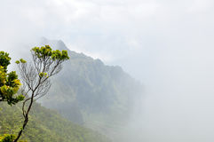 Kalalau Canyon. View from above on Kalalau Canyon with fog on Kauai, Hawaii Stock Photography