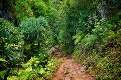 Kalalau slinga i Kauai, Hawaii Fotografering för Bildbyråer
