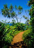 Kalalau trail, Kauai. Along the majestic fins of the world-famous Napali Coast Royalty Free Stock Photography