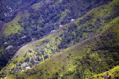 Kalalau Valley, Kauai, Hawaii Royalty Free Stock Photo
