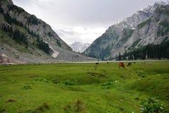 Kalam Paquistán del lago Mohdand Foto de archivo libre de regalías