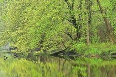 春天海岸线Kalamazoo河 库存图片