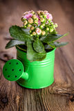 Kalanchoe flower in a water-pot Stock Photo