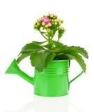 Kalanchoe flower Royalty Free Stock Photos