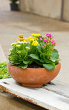 Kalanchoe Flowers. Stock Photos