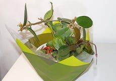 Kalanchoe and  Hoya Carnosa in a pot. Kalanchoe and Hoya Carnosa in a pot for a gift stock photo