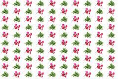 Kalanchoe Laciniata kewensis i czerwoni sztuczni kwiaty Zdjęcia Royalty Free