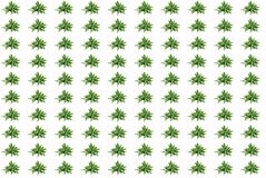 Kalanchoe Laciniata kewensis. Decorative seamless background Stock Photography