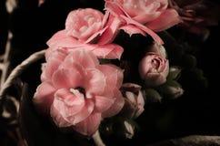 Kalanchoe rosa Immagine Stock