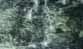 Kalanchoe under mikroskopet Fotografering för Bildbyråer